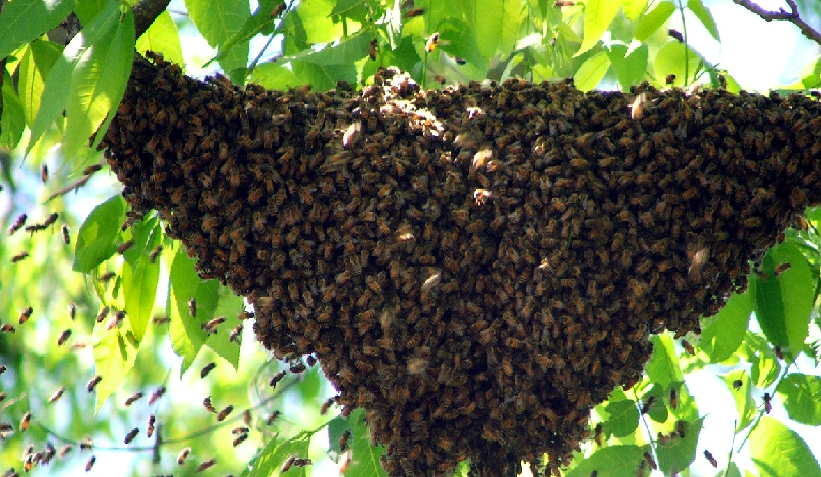 Bee hive in the wild diagram